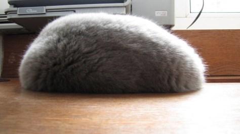 【猫画像】石? もち?