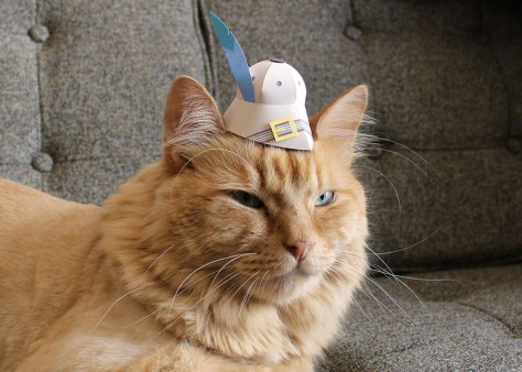tiny_hats_on_cats03