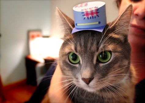 tiny_hats_on_cats07