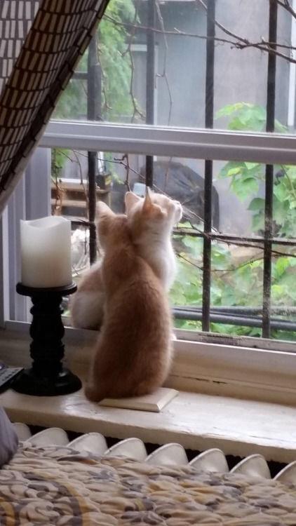 【猫画像】猫 X