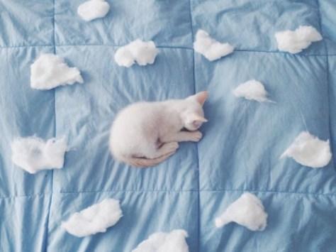 【猫画像】雲