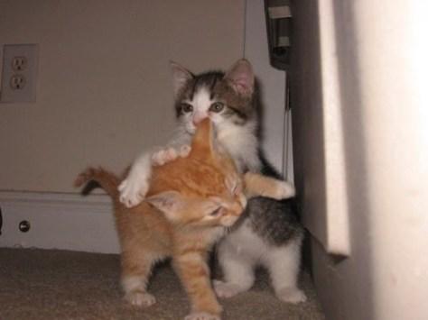 【猫画像】小競り合い