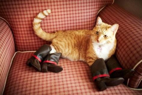 【猫画像】長靴をはいた猫?