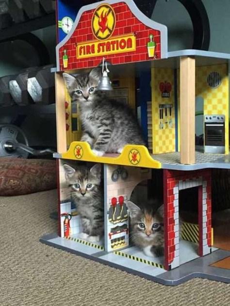 【猫画像】猫アパート