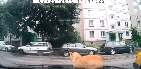 cat_vs_car02