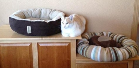 【猫画像】モヤモヤする猫画像