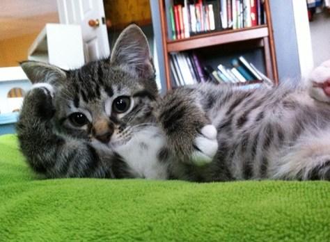 【猫画像】ココ空いてますよ