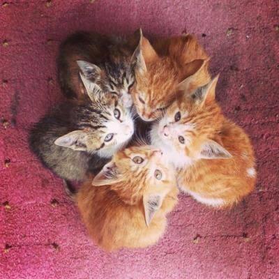 【猫画像】合体!