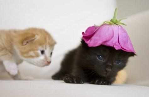 【猫画像】帽子!?