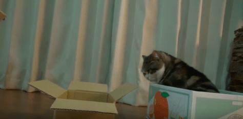 cat_likes_boxes06