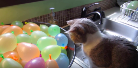cat_water_balloon05
