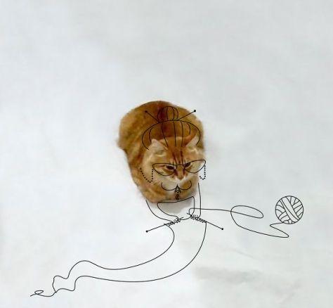 doodle_cat_photo09