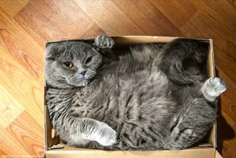 【猫画像】せまっ!