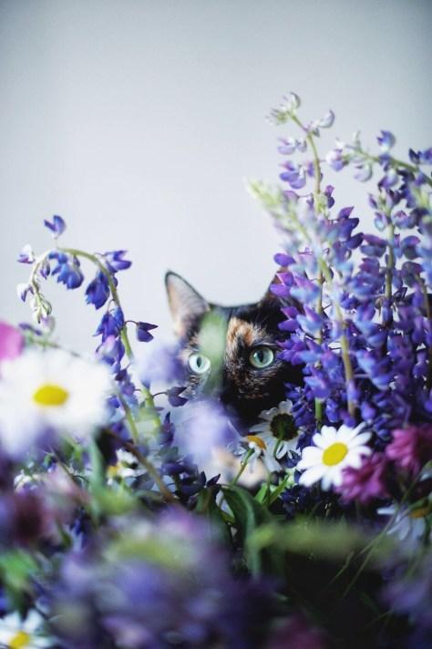 【猫画像】猫と花
