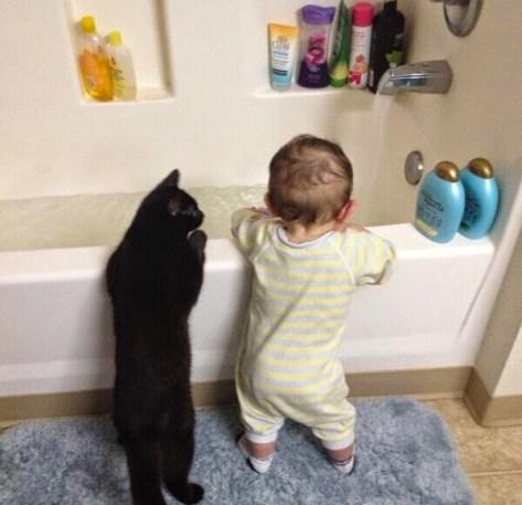 【猫画像】猫もヒヤヒヤ