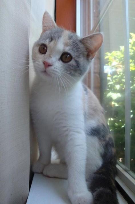 【猫画像】窓際の猫