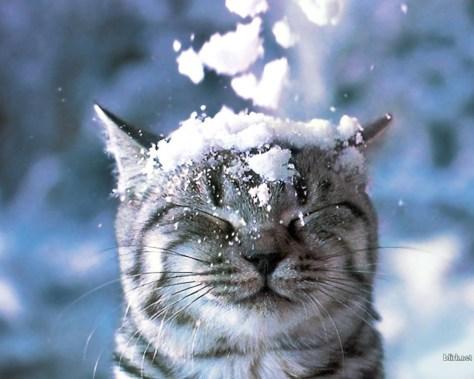 【猫画像】キャッ!