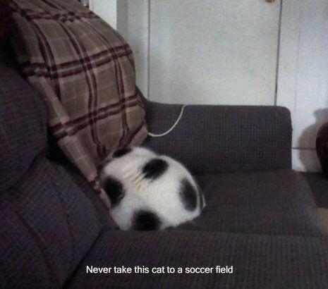 【猫画像】サッカーボール!?