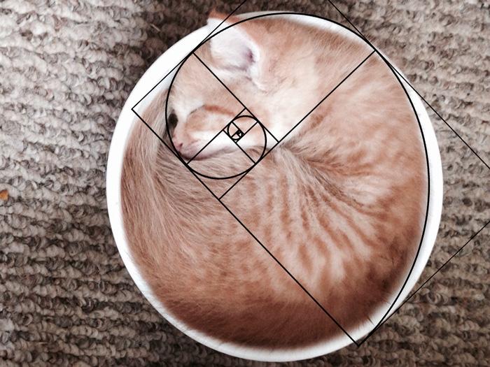 【猫ネタ】猫のかわいさの秘密が!?猫に「黄金比」を重ねてみると・・・!?