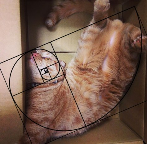cat_furbonacci_sequence02