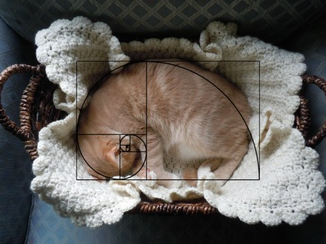 cat_furbonacci_sequence03