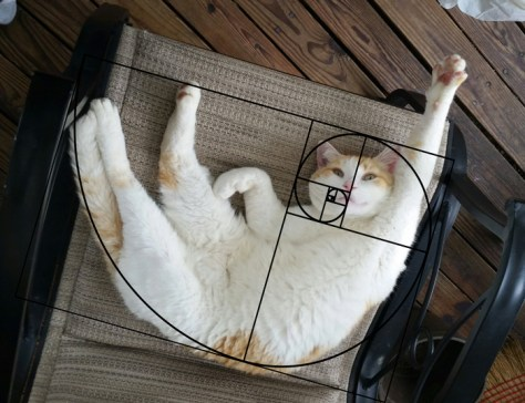 cat_furbonacci_sequence05
