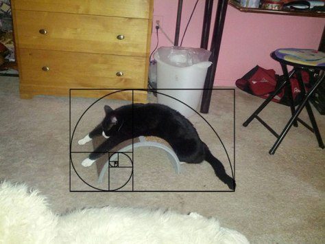 cat_furbonacci_sequence06