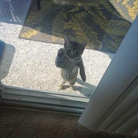 【猫画像】こんにちは〜