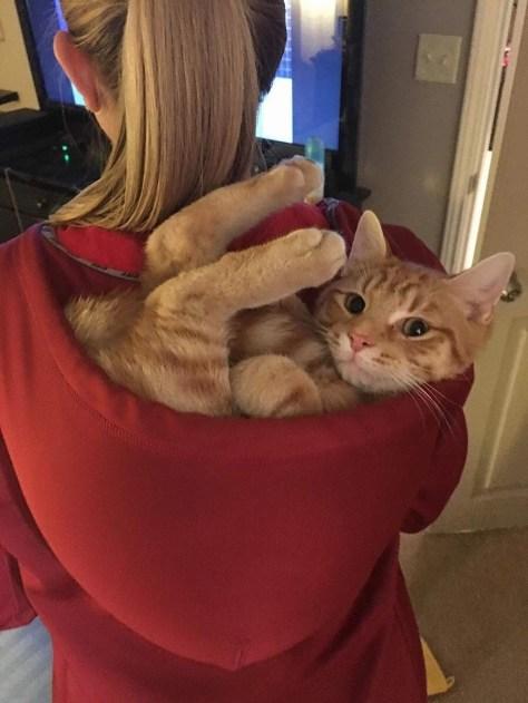 【猫画像】エエとこ見つけた