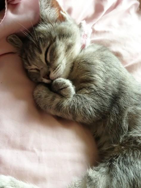 【猫画像】ぐっすり