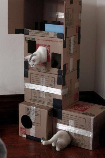【猫画像】ワープ!!