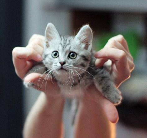【猫画像】飛んでる気分!?