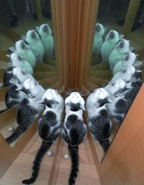 【猫画像】猫の円陣!?