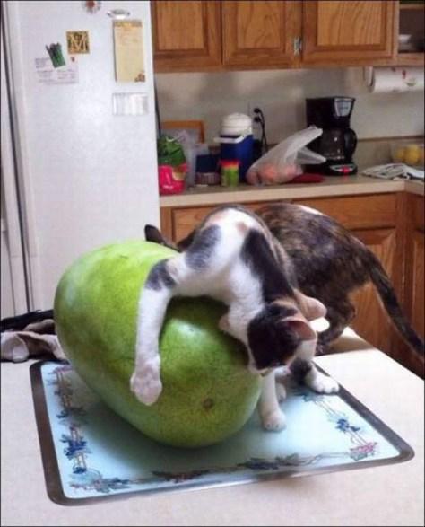 【猫画像】無謀な挑戦