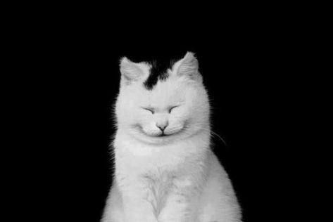 【猫画像】ねむ・・・