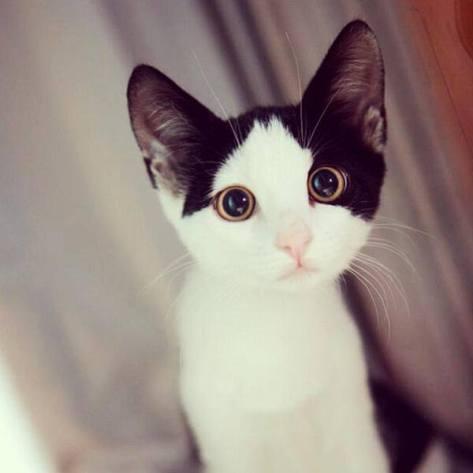 【猫画像】まんまるな目