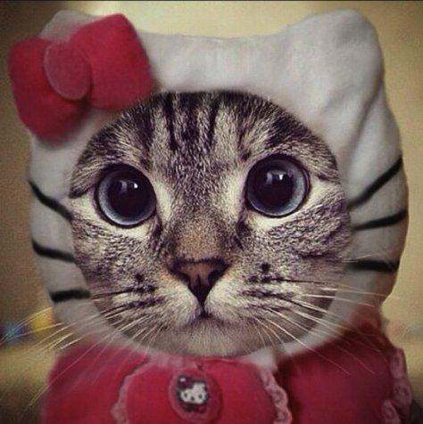 【猫画像】キティ風!?