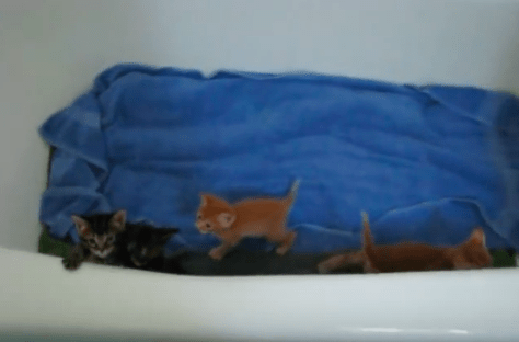 kitten_in_the_bath07