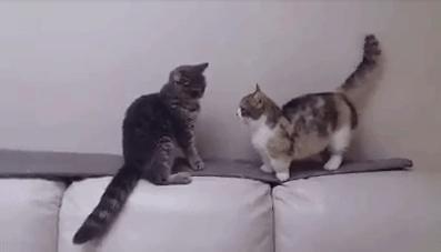 vital_cat_fight01