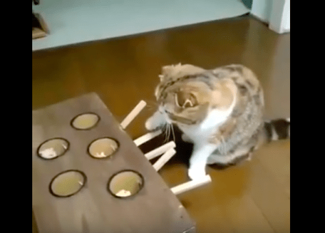 Ingenious_cat_toy01