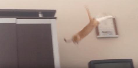 cat_jump_fail04