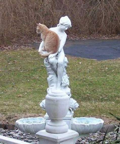 【猫画像】抱かれてる風