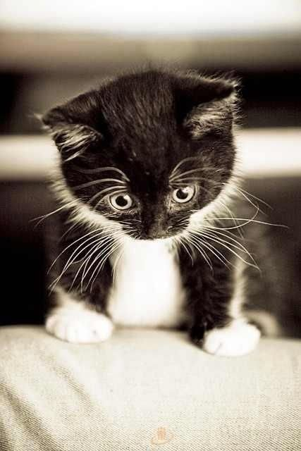 【猫画像】!