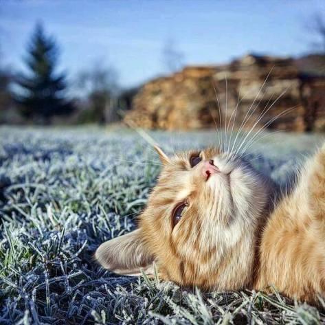 【猫画像】広場でゴロ寝
