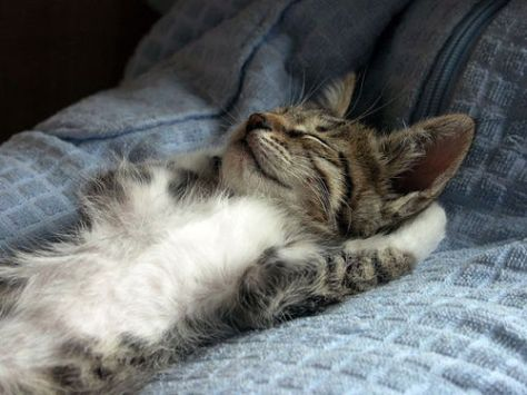 【猫画像】スースー