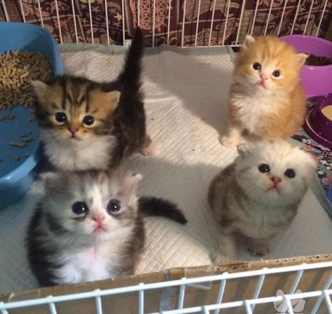 【猫画像】注目