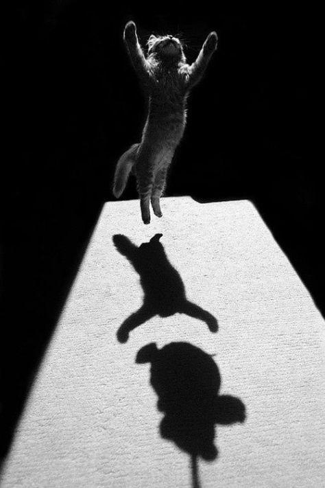 【猫画像】ジャンプ!!