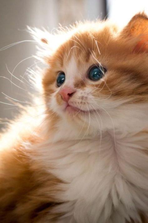 【猫画像】フサフサ