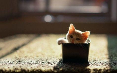 【猫画像】箱入り子猫