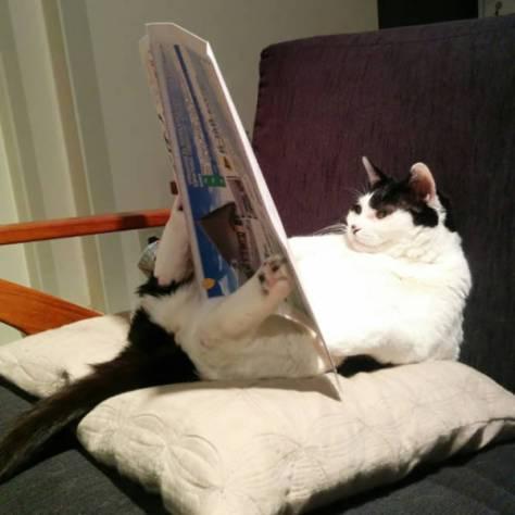 【猫画像】日課?